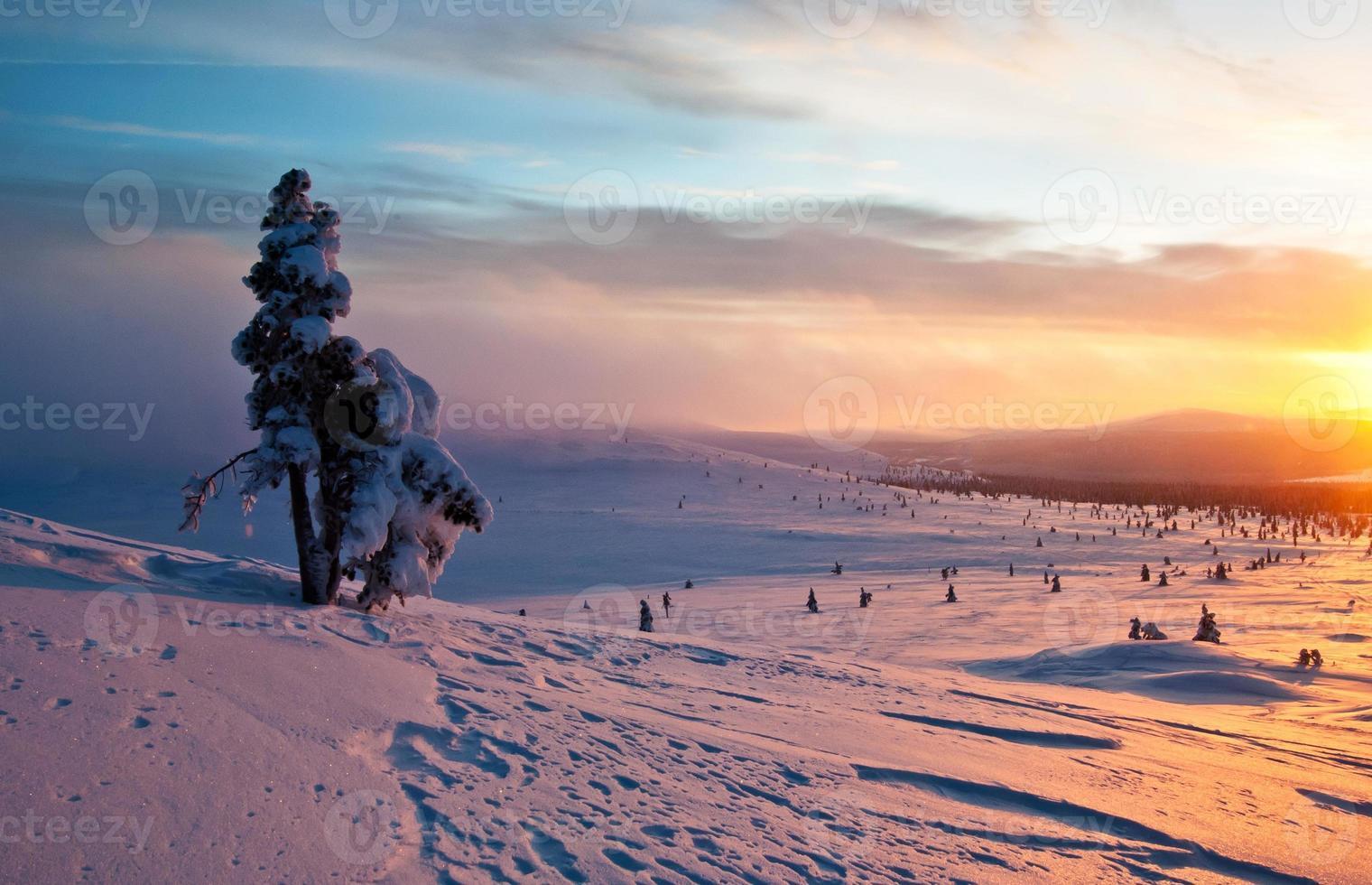 árvore ao pôr do sol no inverno foto