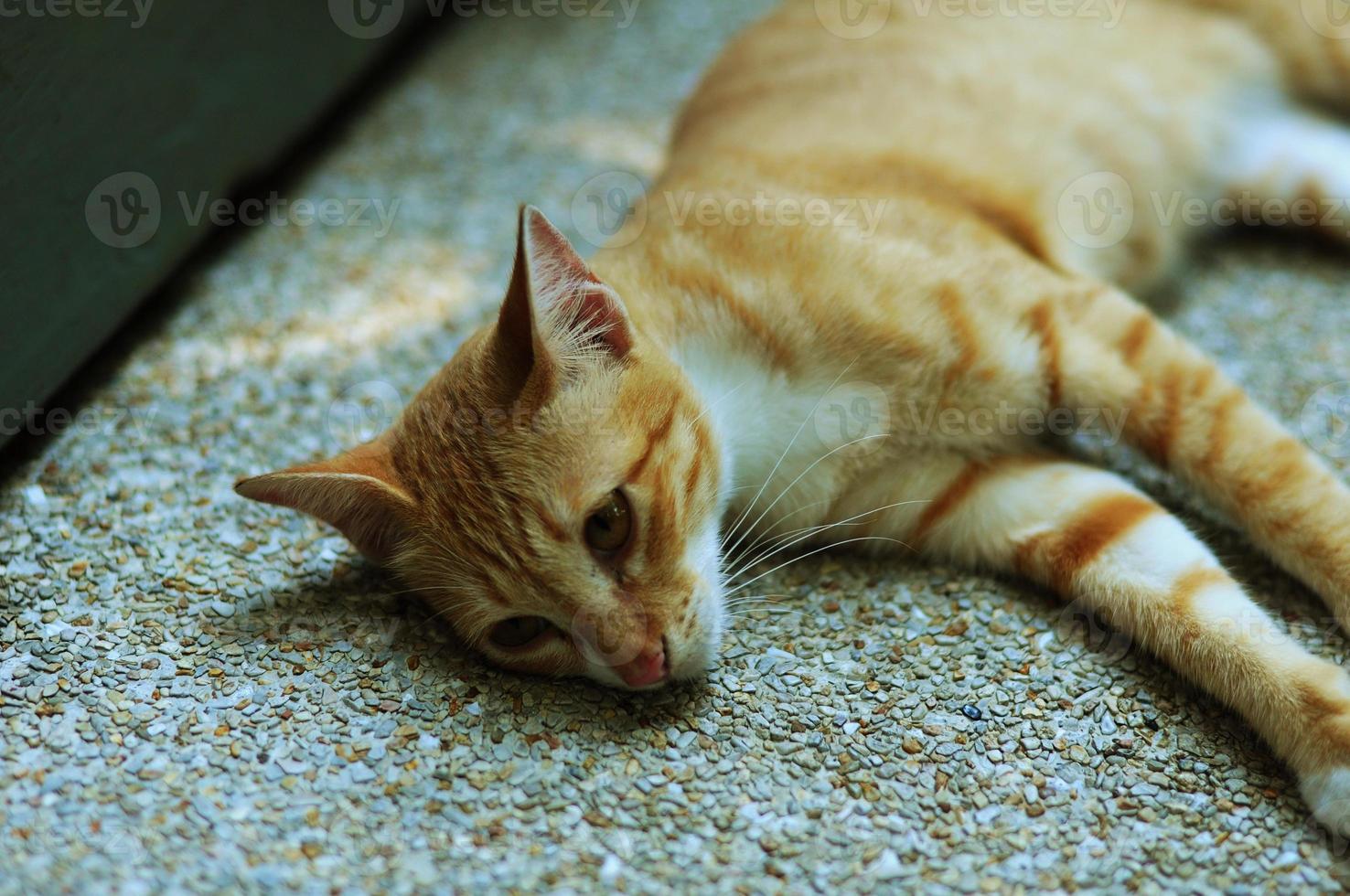 gato bonito foto