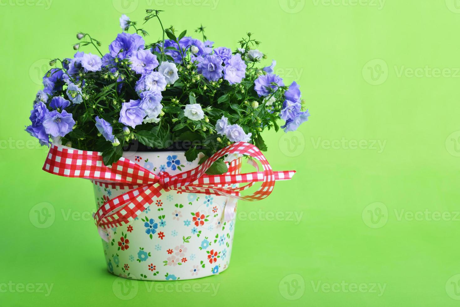 flores de campânula foto
