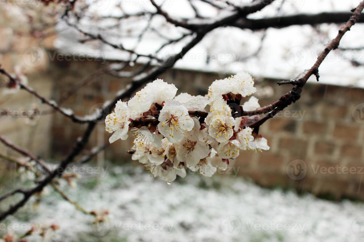 flores congeladas foto