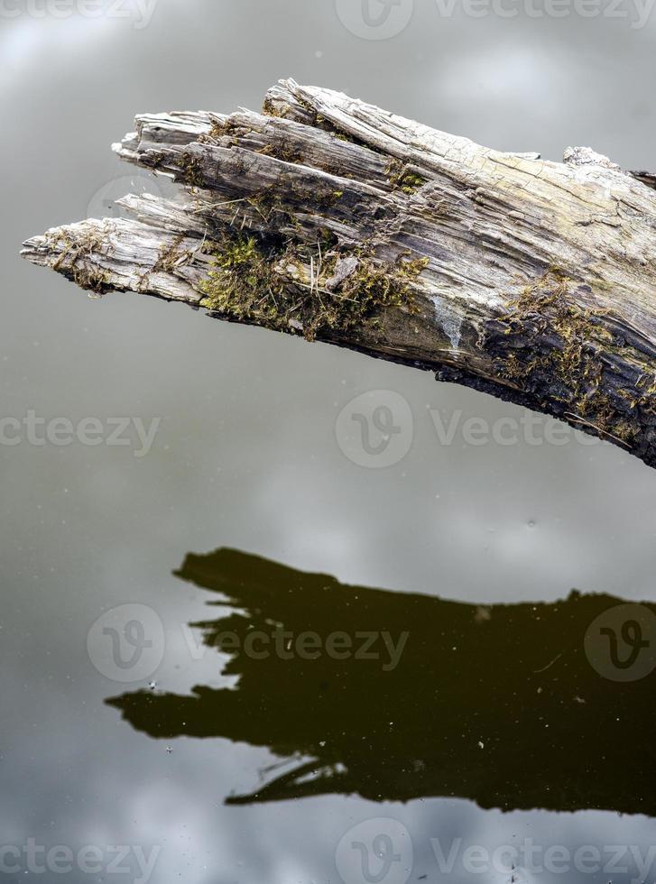 galho quebrado de uma árvore sobre a água. foto