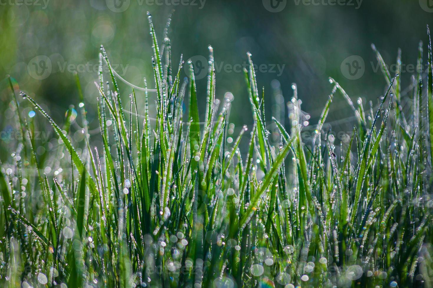 grama com gotas de água no início da manhã foto