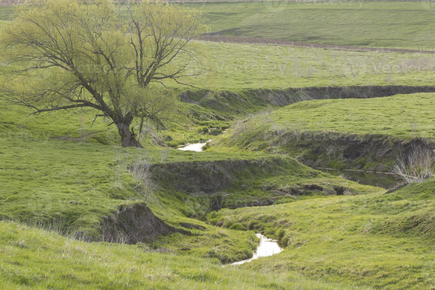 riacho rural na primavera foto