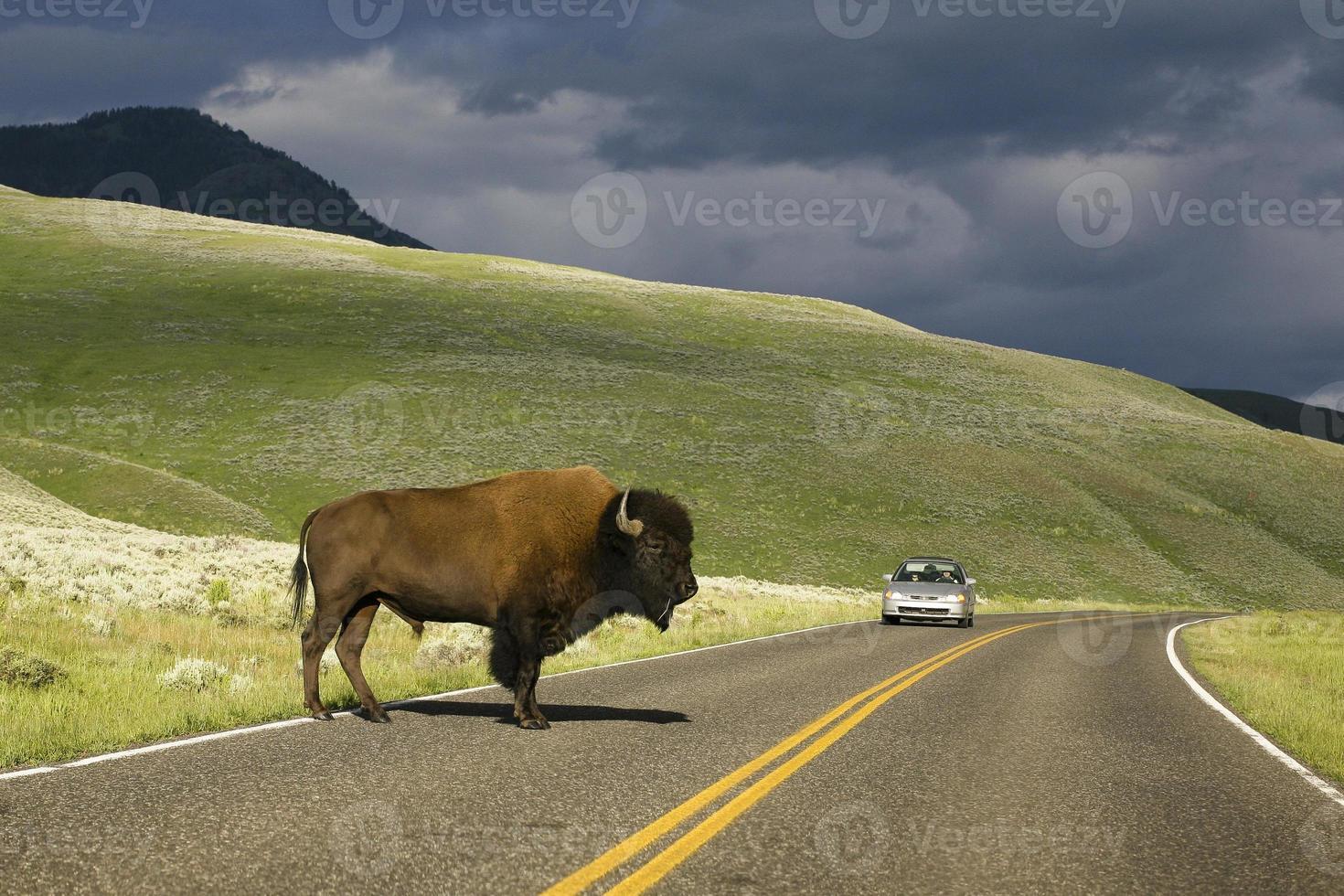 búfalo de estrada foto