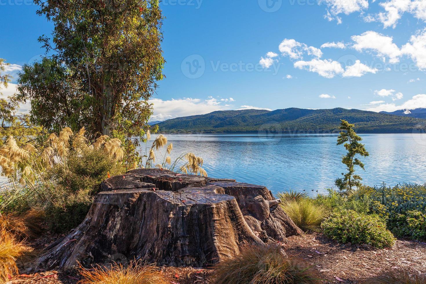 lago te anau com grande toco de árvore, fiordland, new zealamd foto