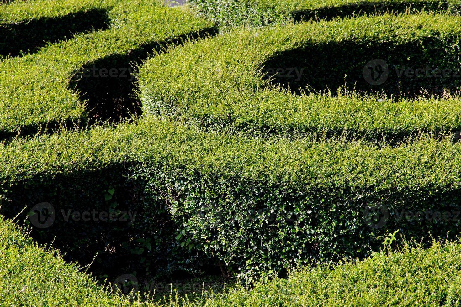 labirinto labirinto foto