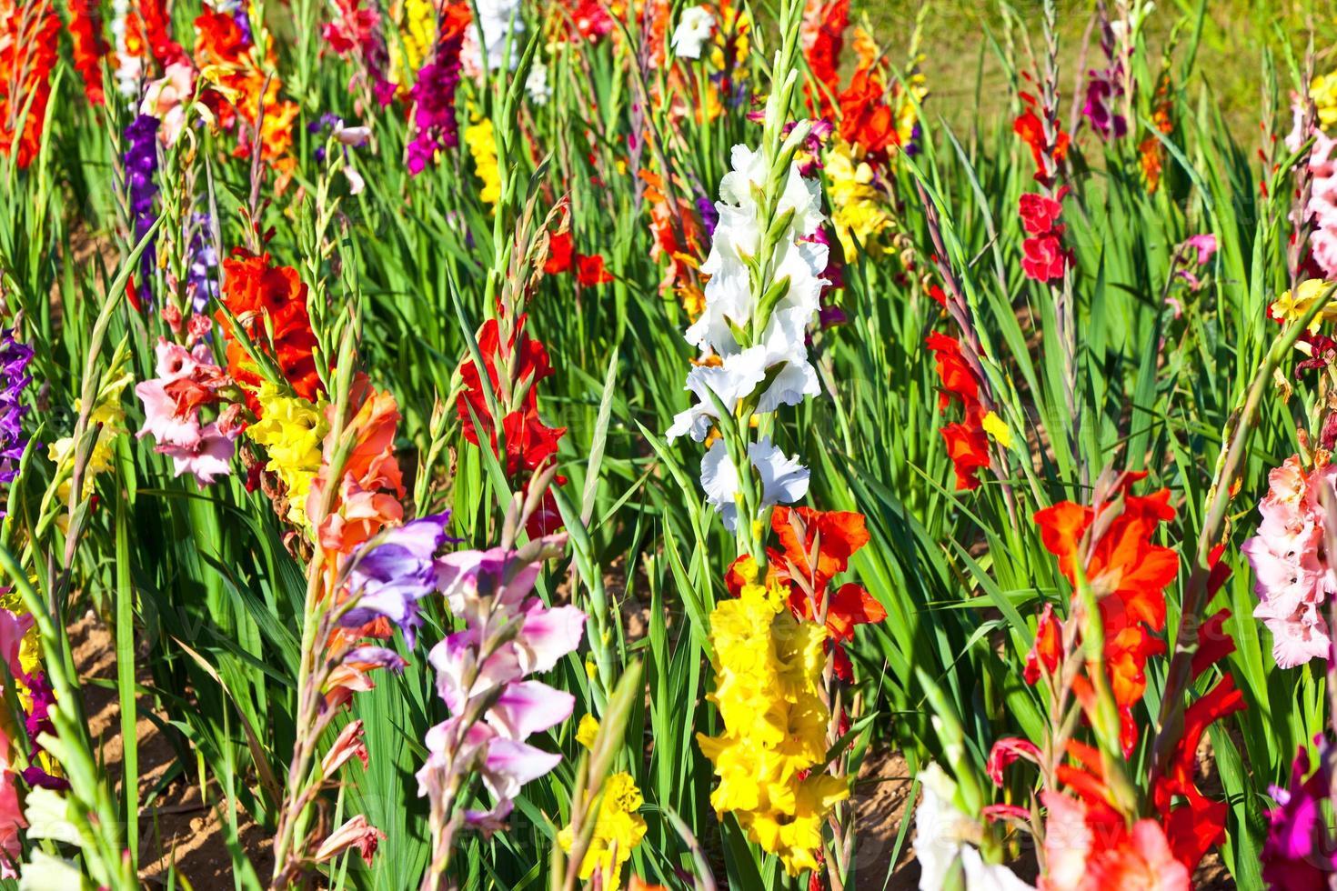 lindas flores no prado foto