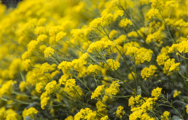 flora foto