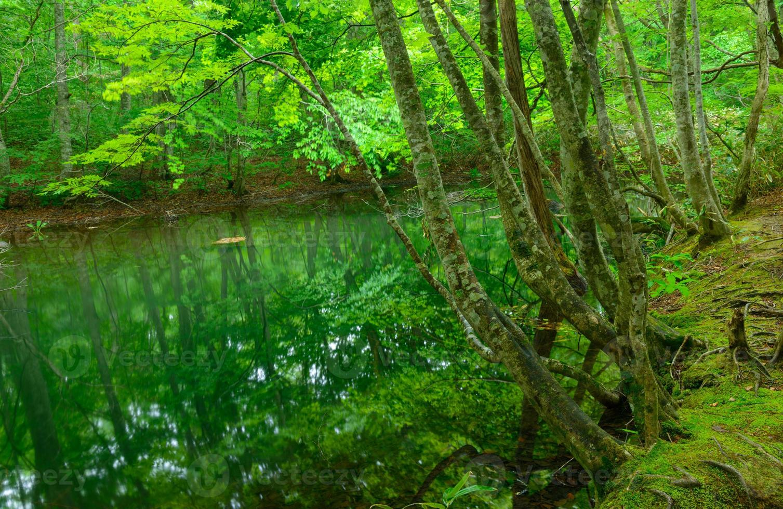 lagoa tsutanuma em aomori, japão foto