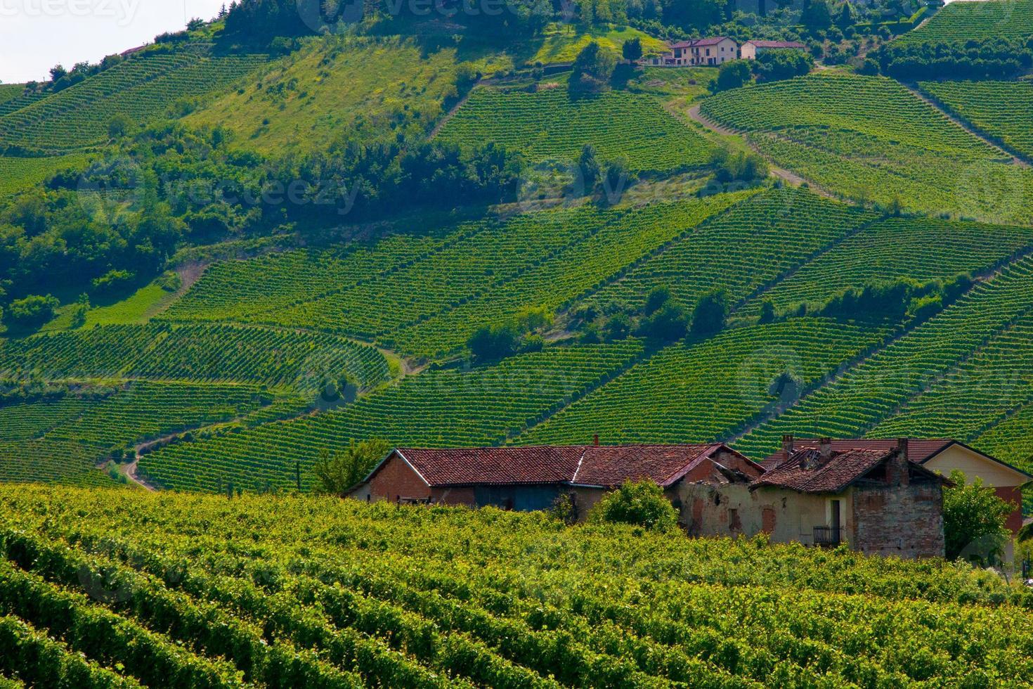 campos de vinho foto