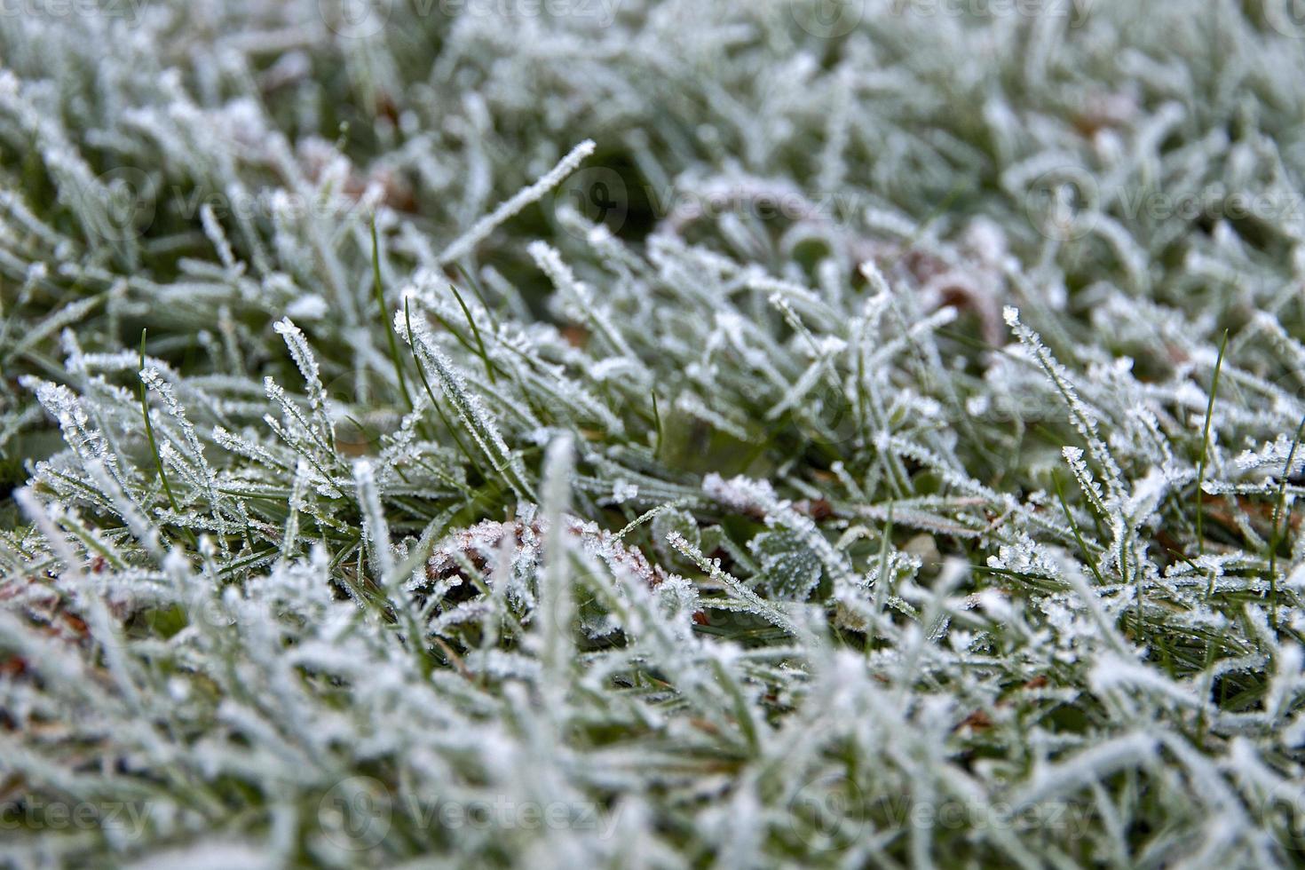 geada em folhas de grama foto