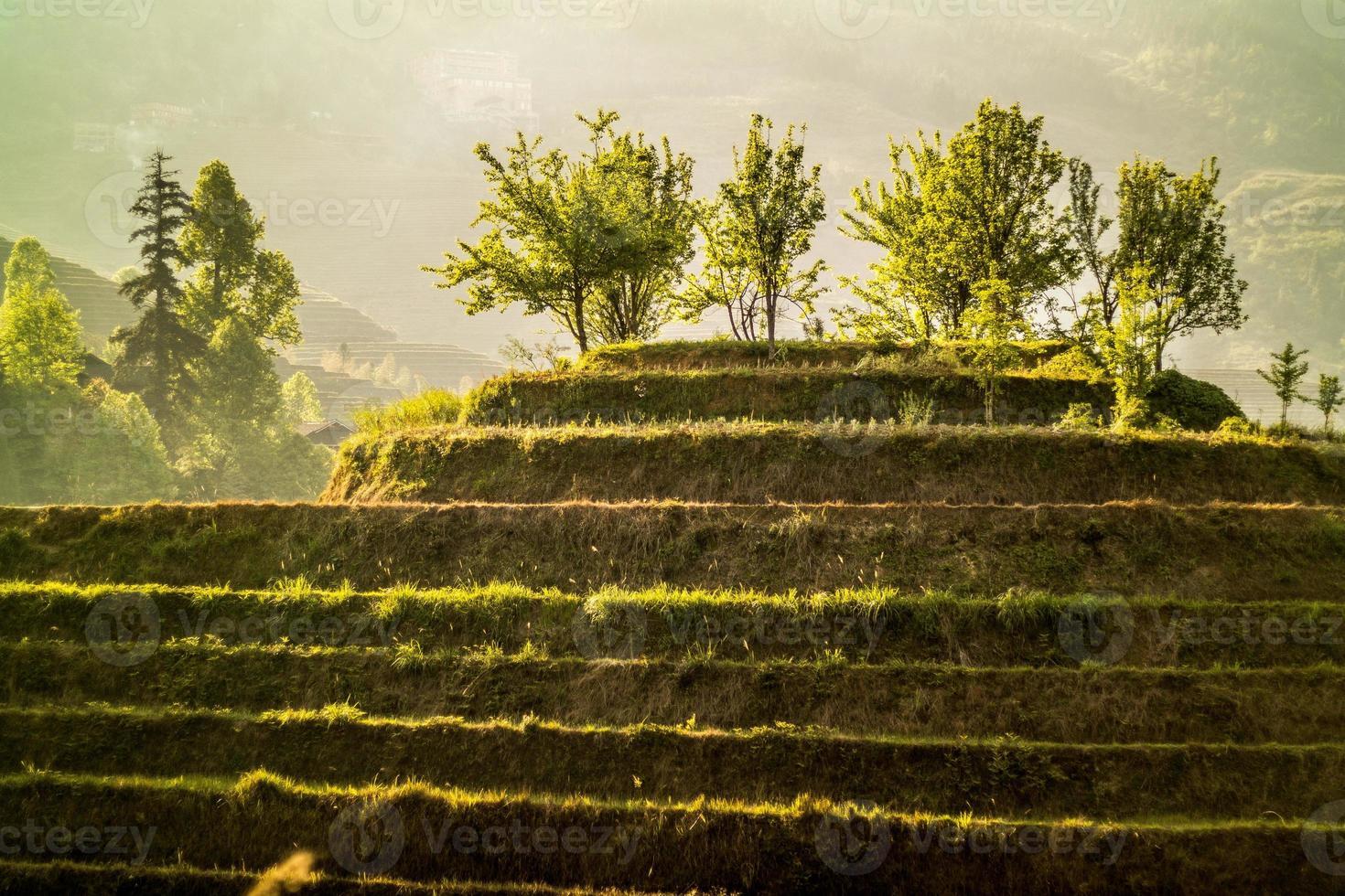 terraços de arroz longji foto
