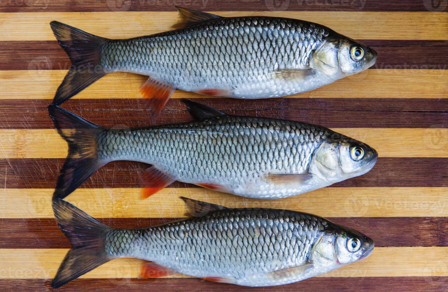 peixes frescos foto