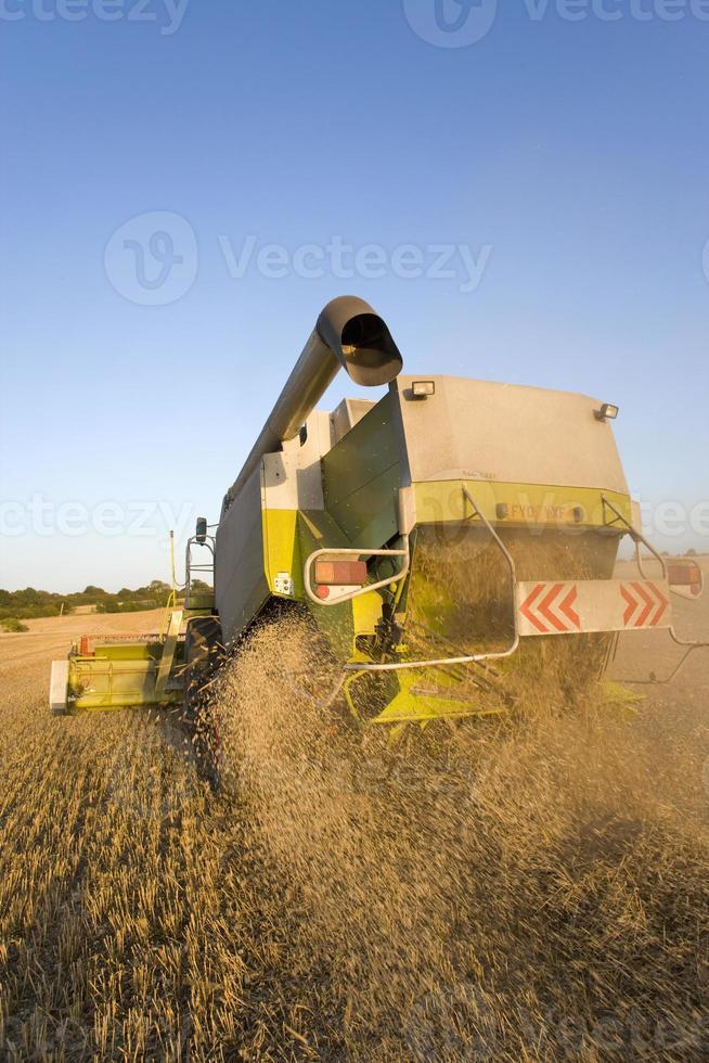 colhedora de trigo foto