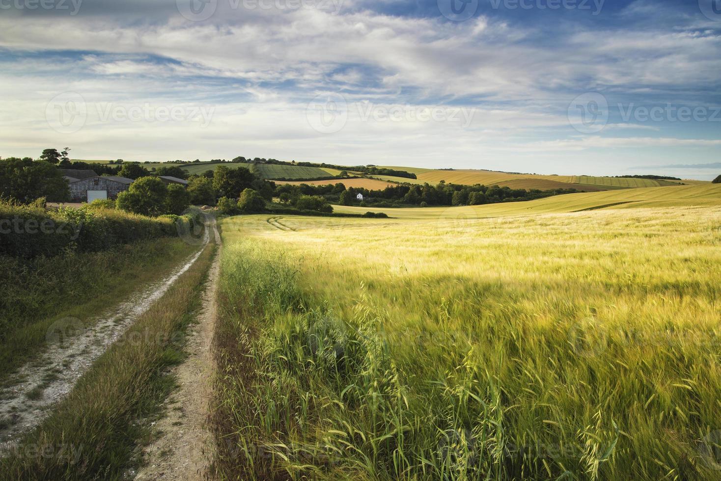 paisagem de verão sobre campo agrícola de safras foto