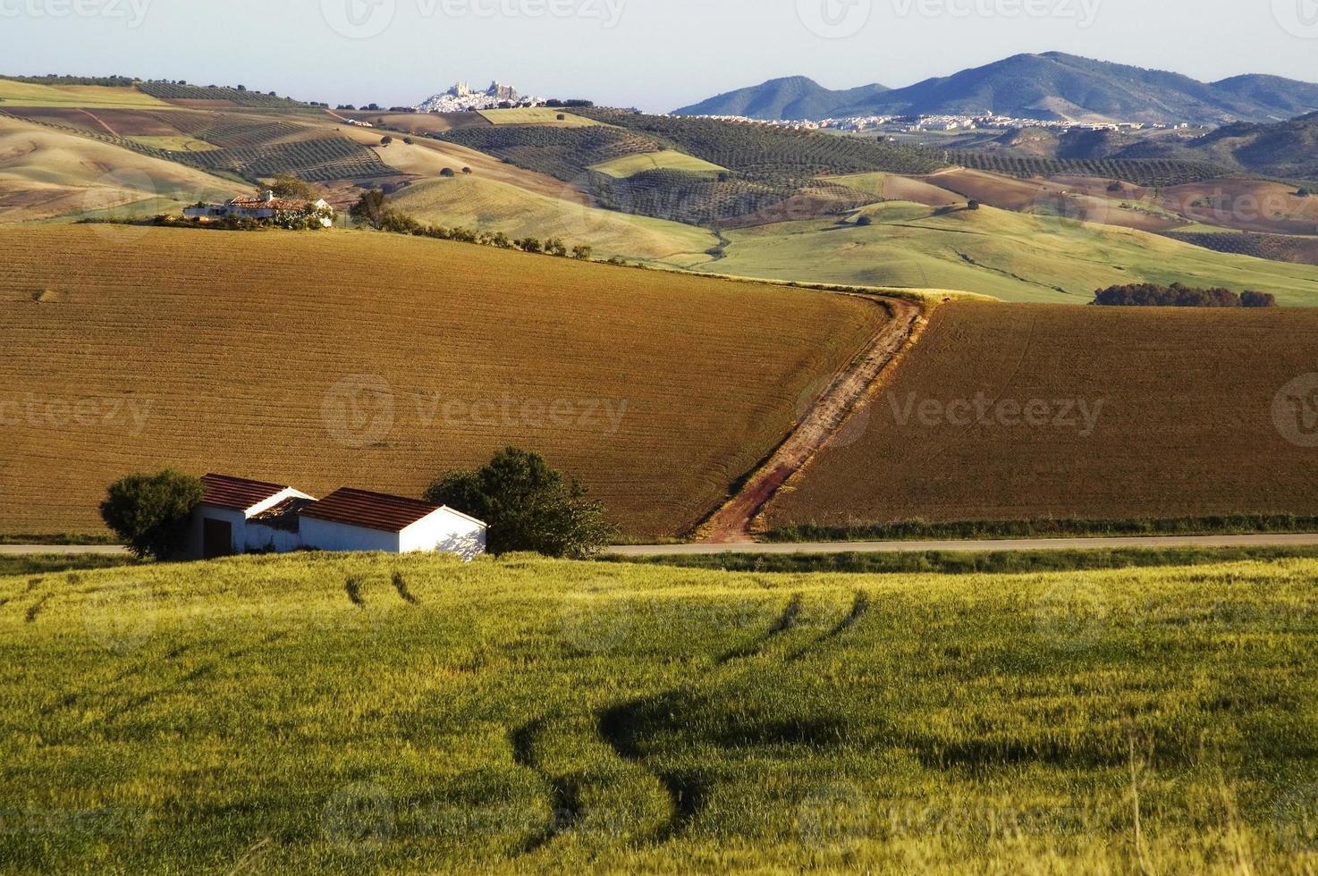 paisagem com campos de milho, colinas e cidade branca de olvera, andaluzia, espanha foto