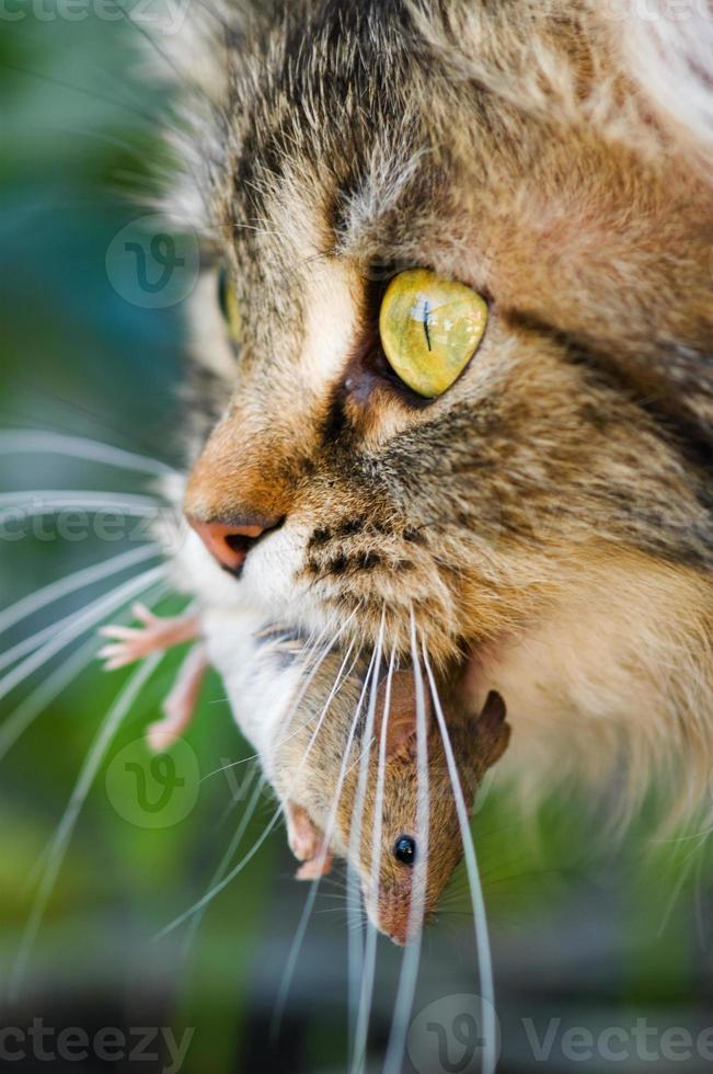 gato e rato foto