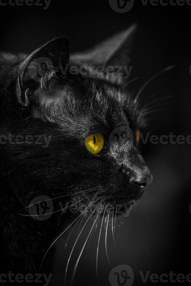 Katze Kater Augen Gelb foto