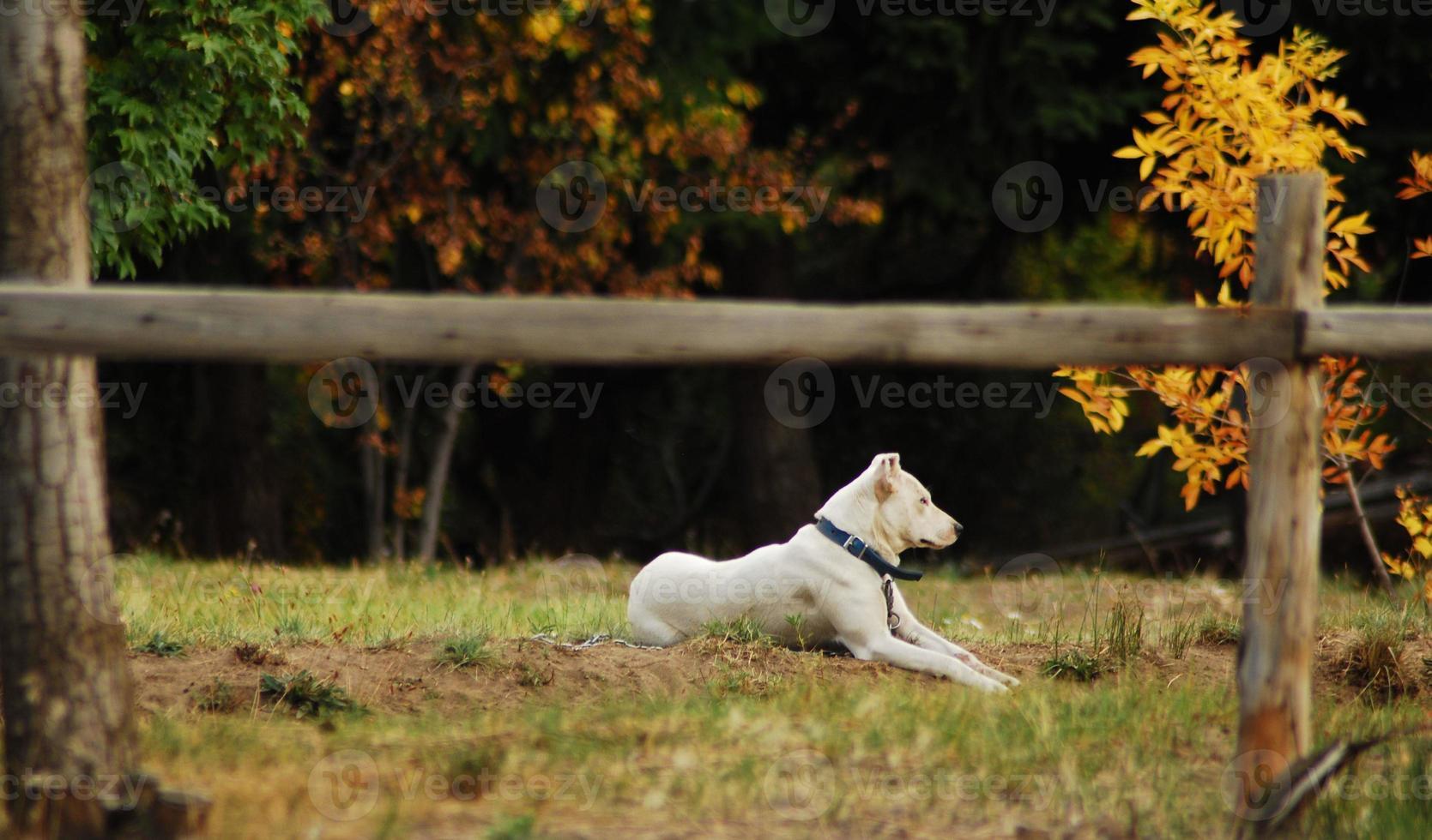 perro guardião foto