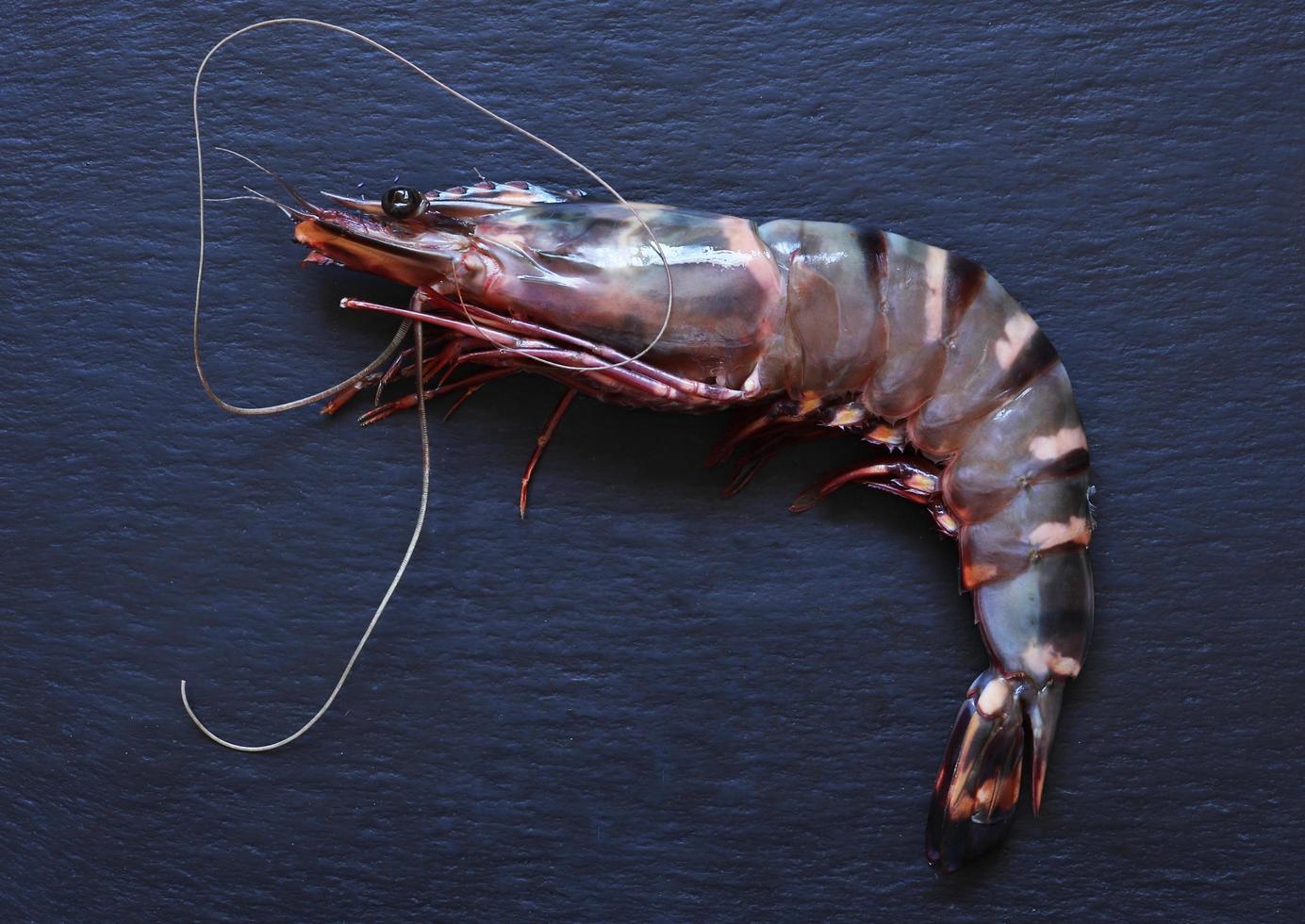 um camarão tigre preto em fundo de ardósia foto