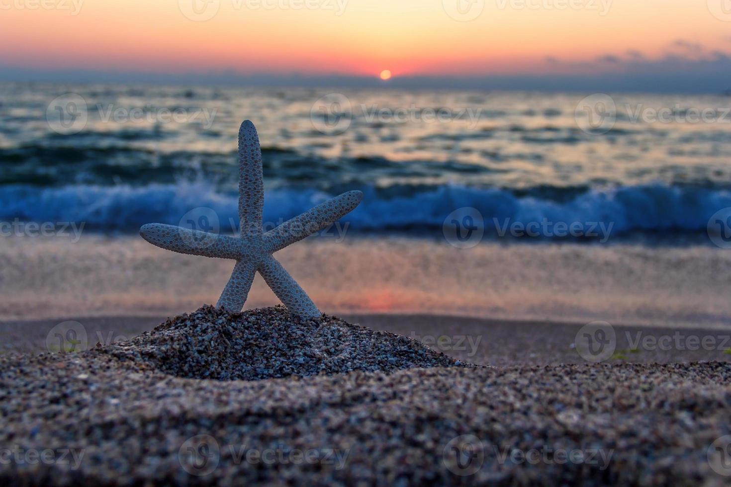 estrela do mar na praia ao pôr do sol foto