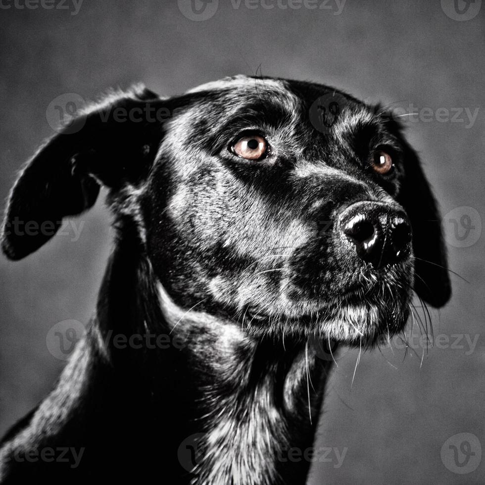 cachorro preto foto