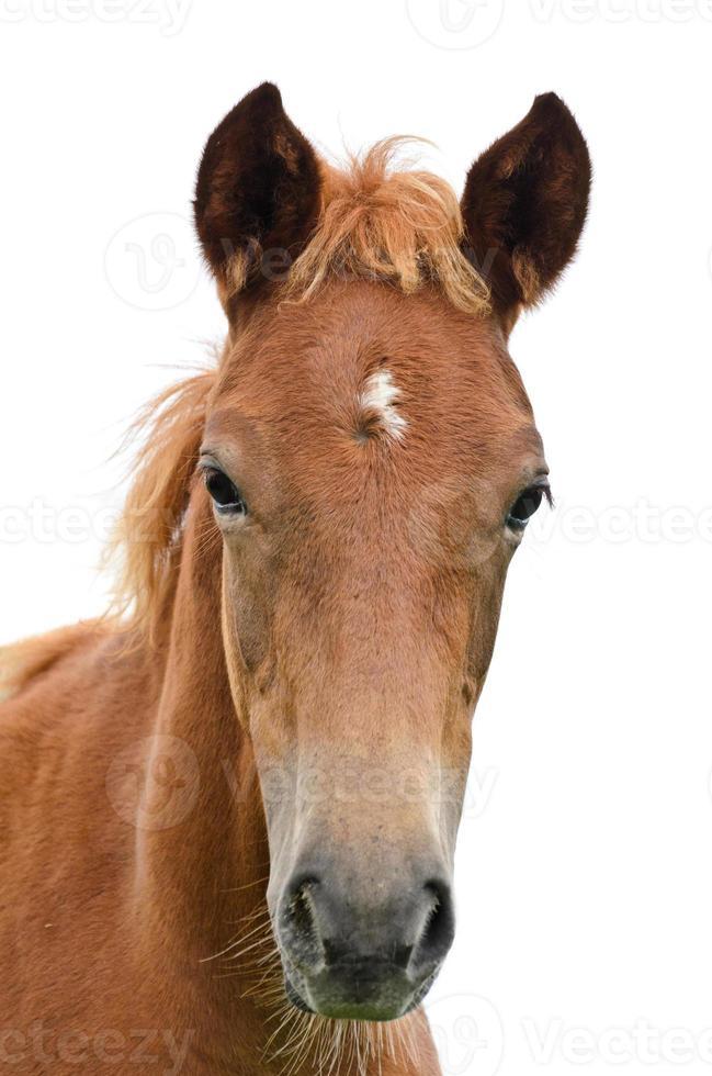 frente da cabeça do cavalo .. foto