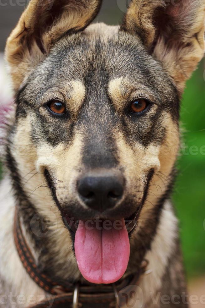 cão bonito foto
