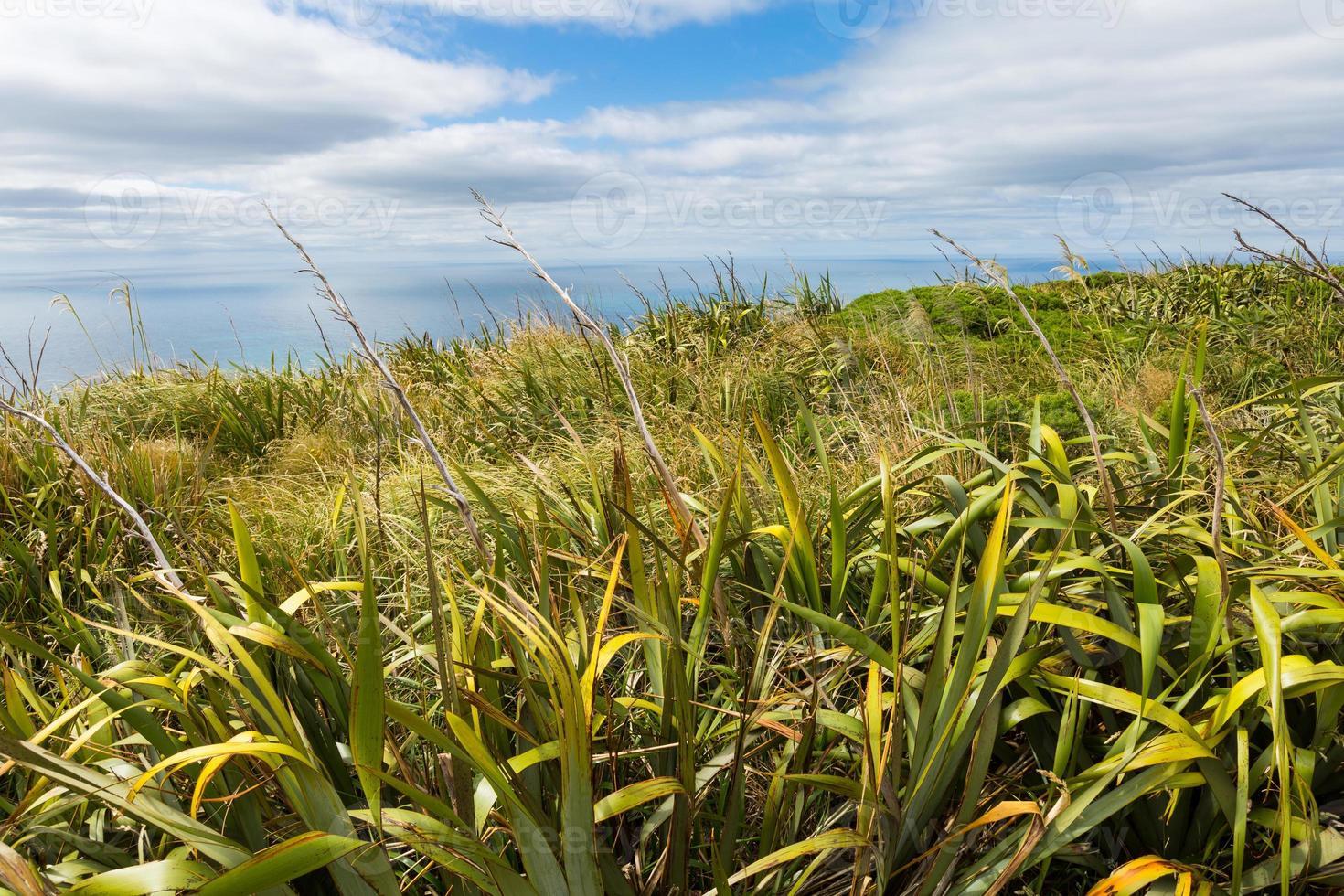 vista costeira do topo do mouintain. Nova Zelândia foto