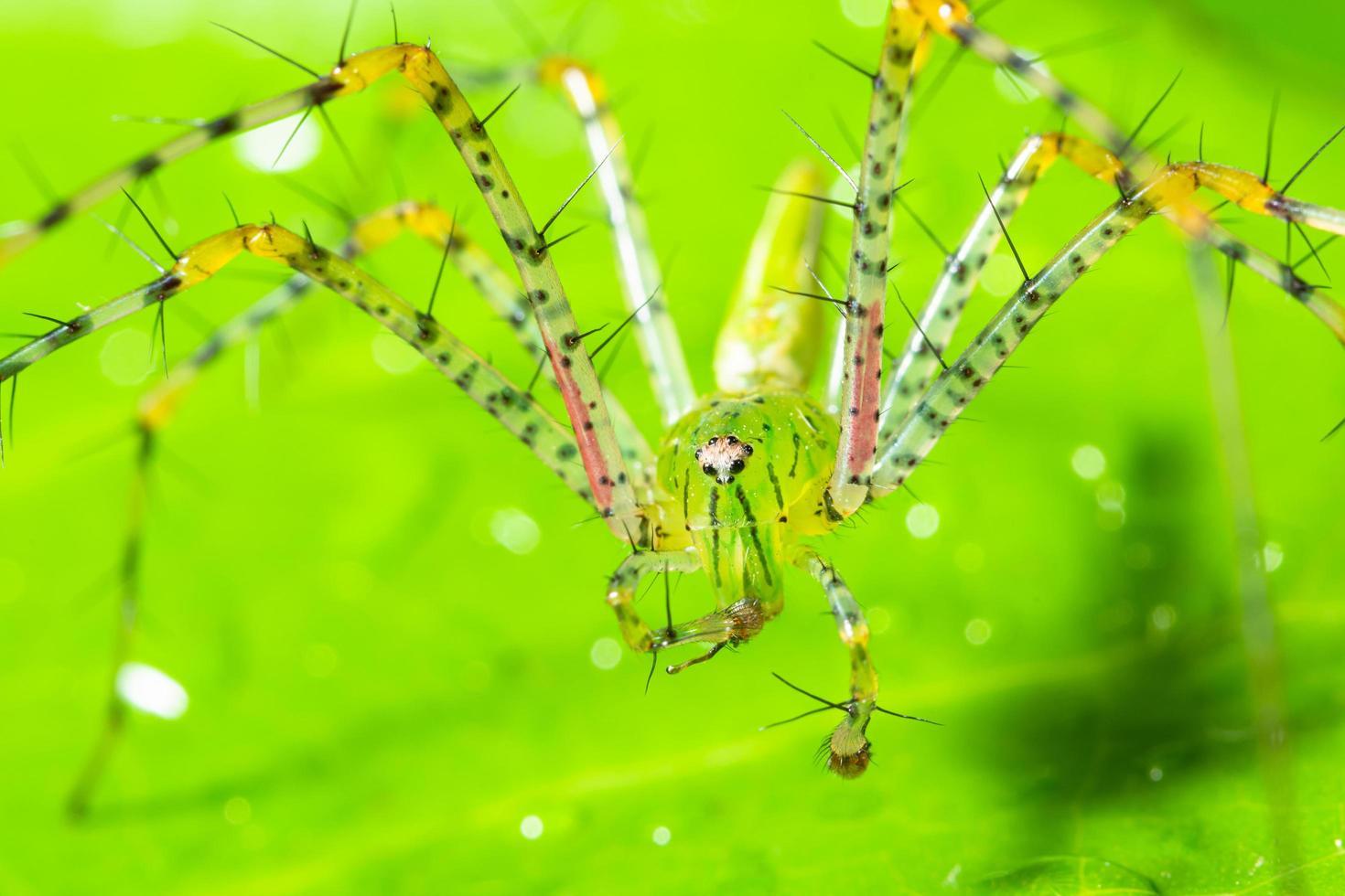 aranha verde em uma folha foto