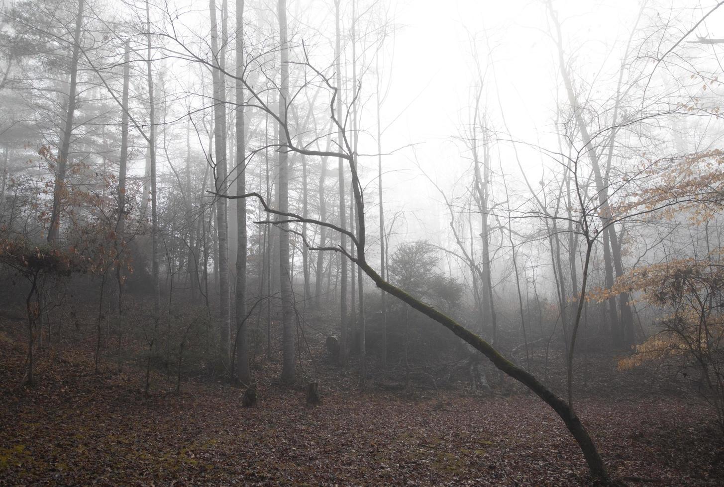 clareira na floresta rural em uma manhã nevoenta de inverno foto