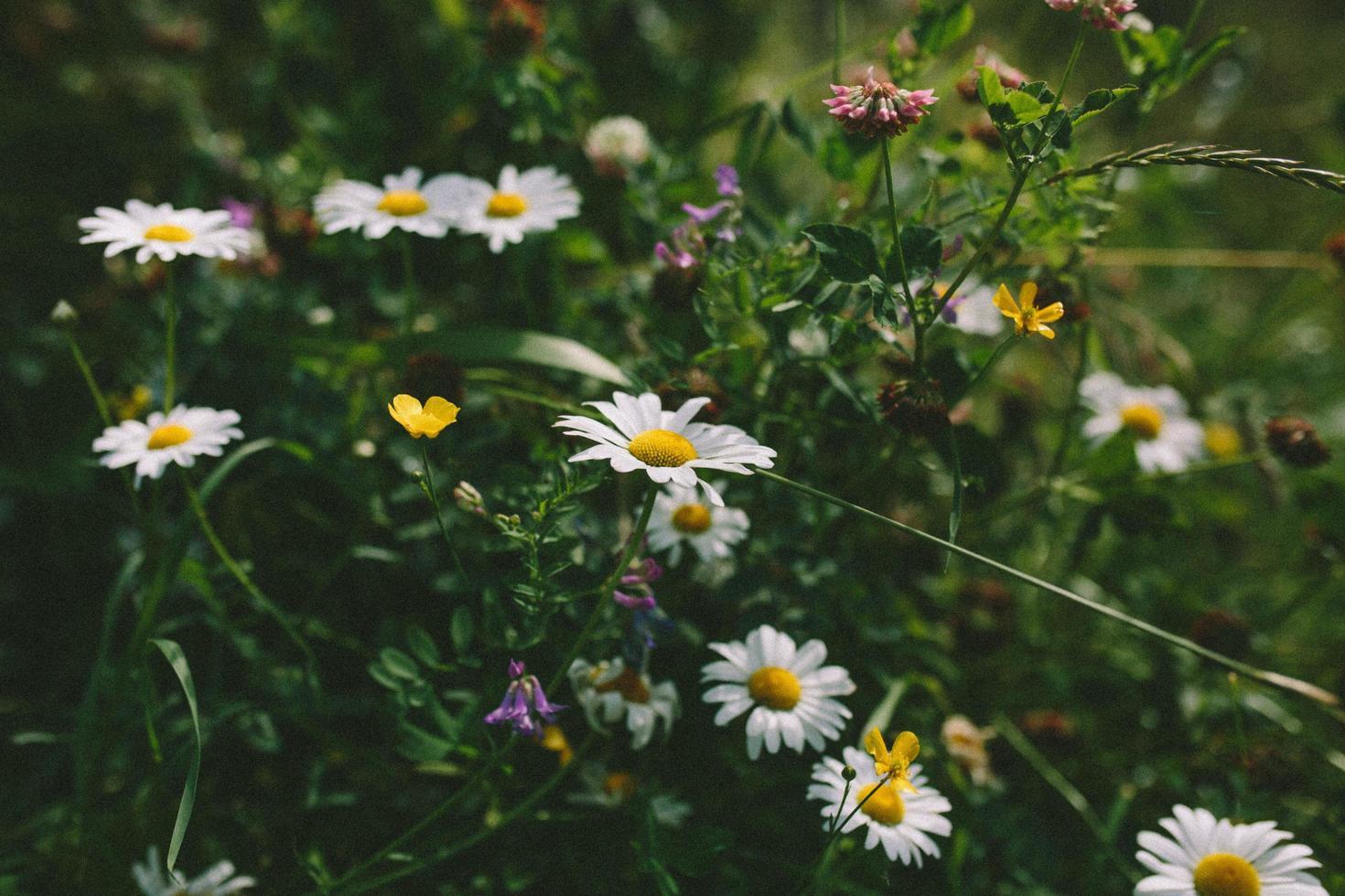 flores brancas e amarelas em lente tilt shift foto