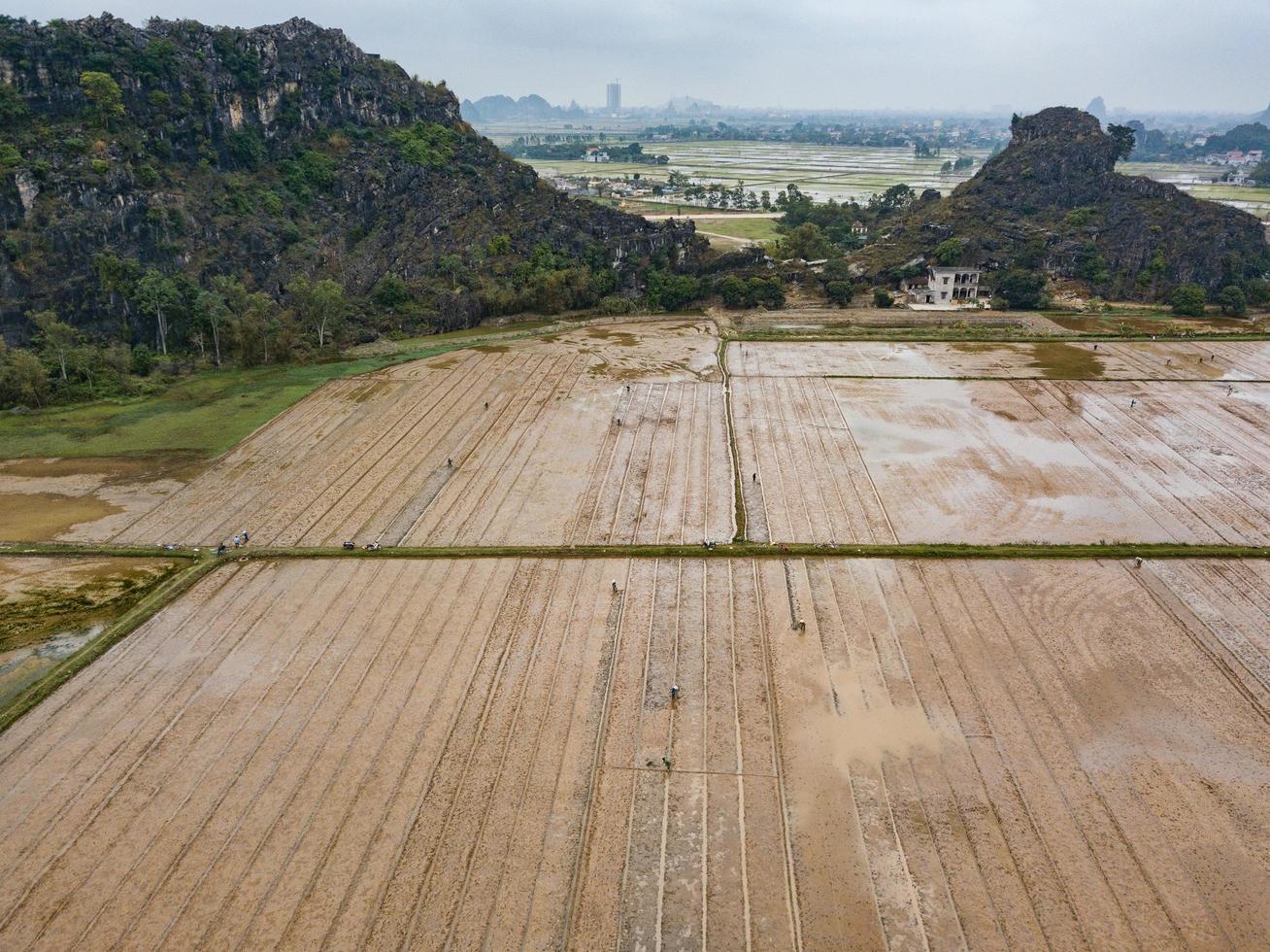 thanh pho ninh binh, vietnã, 2017- pessoas plantando arroz em um campo foto
