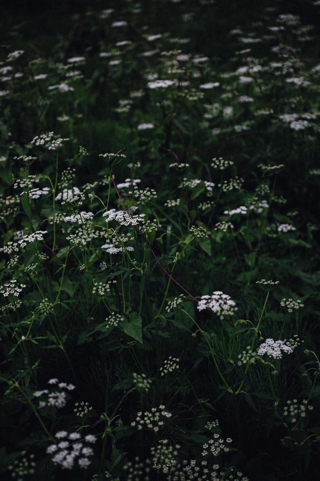 flores brancas e roxas em lente tilt shift foto