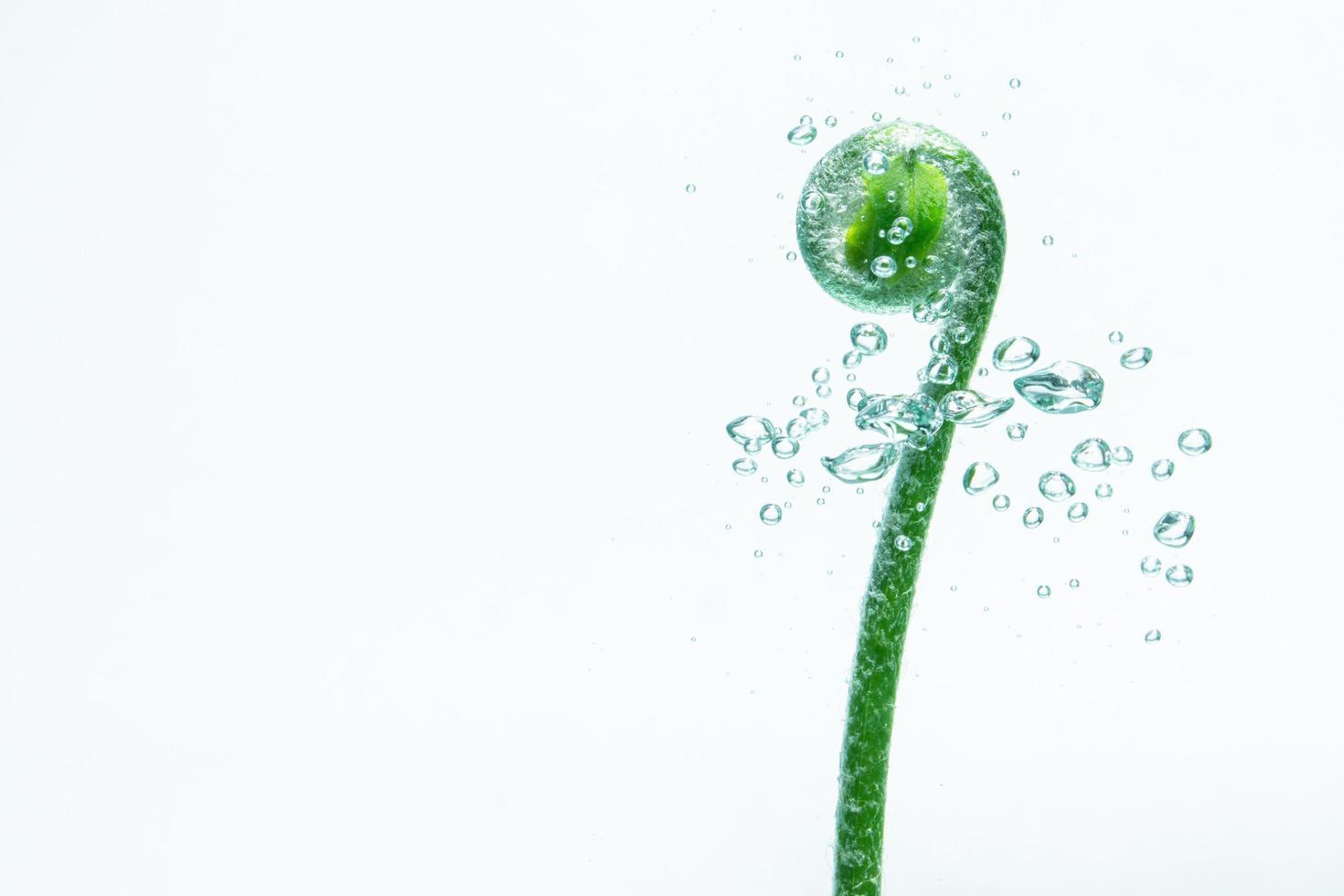 planta verde e bolhas na água foto