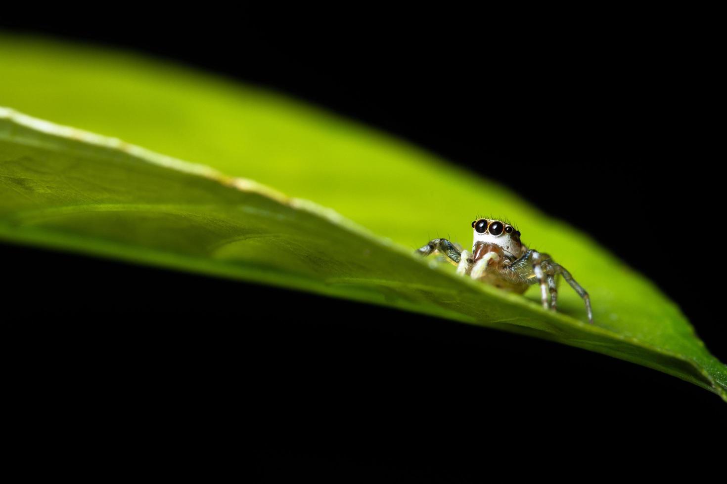 aranha em uma folha, close-up foto