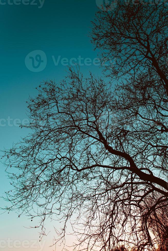 silhuetas de árvores no céu azul foto
