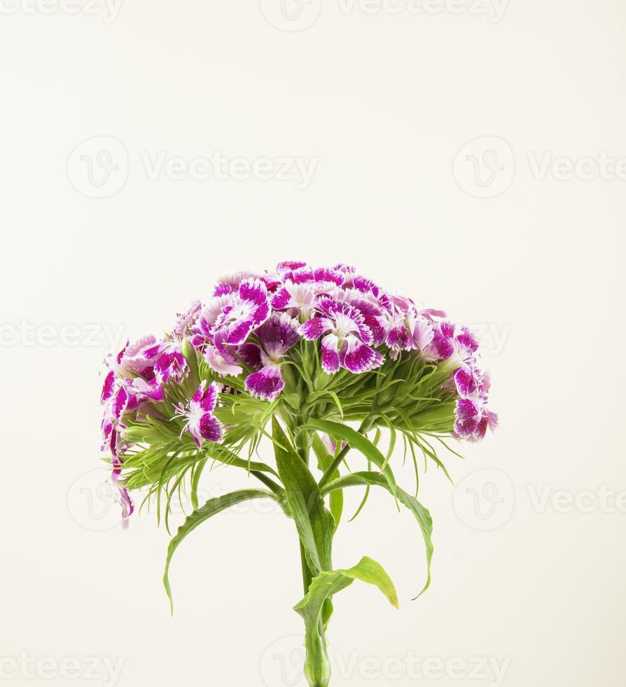 close-up de flores roxas e brancas foto