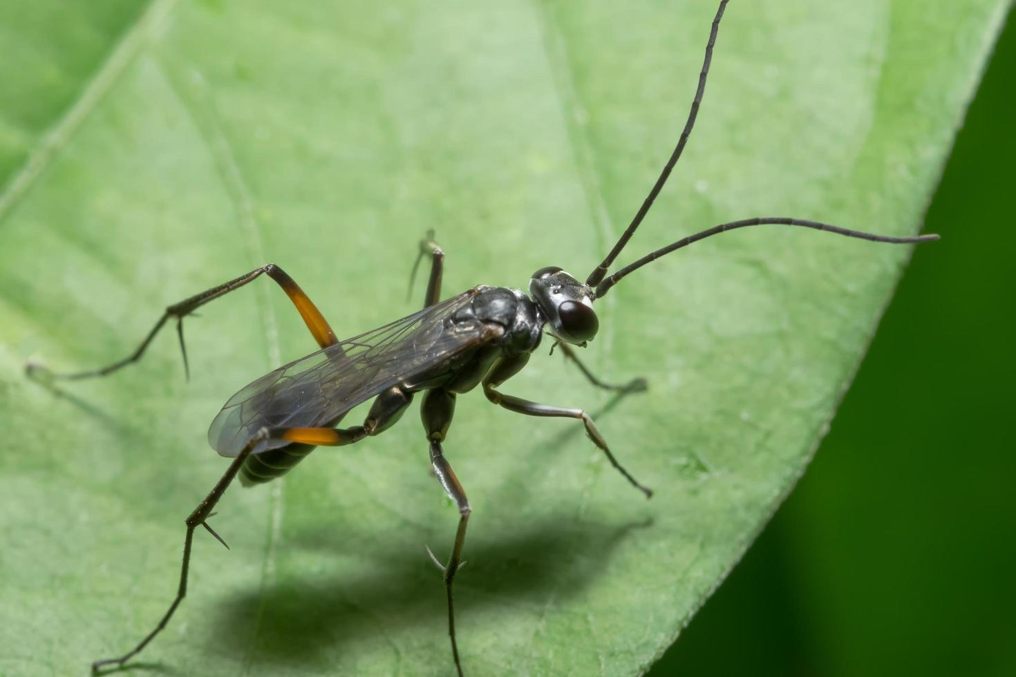 inseto em uma folha foto