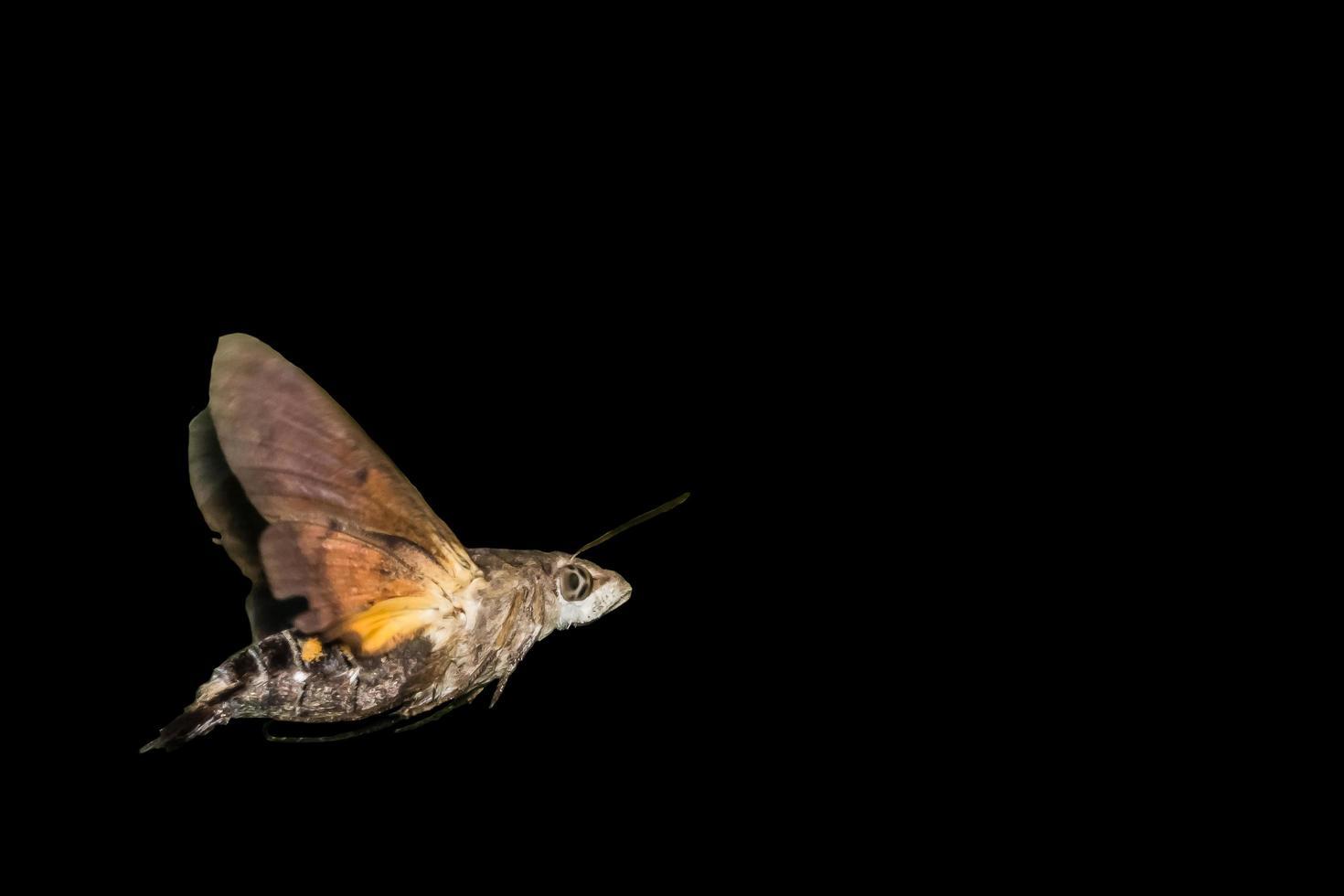 mariposa em fundo preto foto