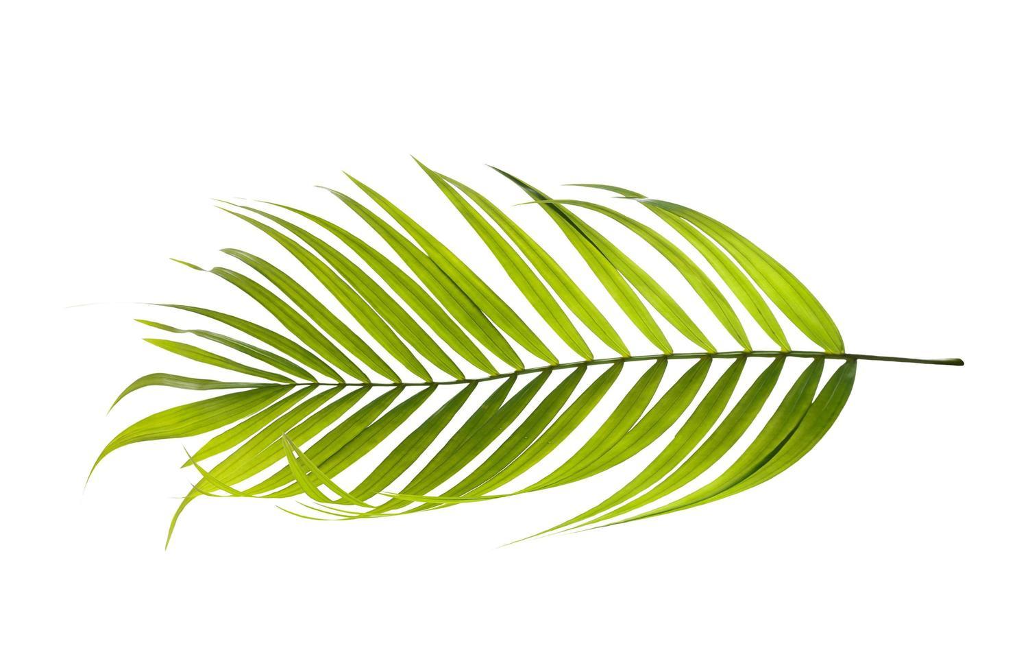folha verde brilhante em um fundo branco foto