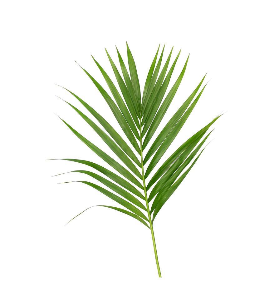folhas tropicais verdes exuberantes em branco foto