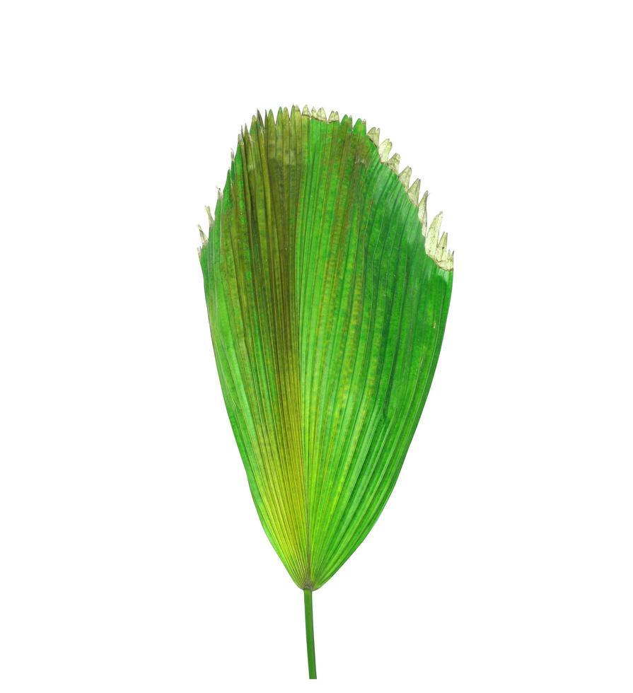 folhagem tropical verde com manchas marrons foto