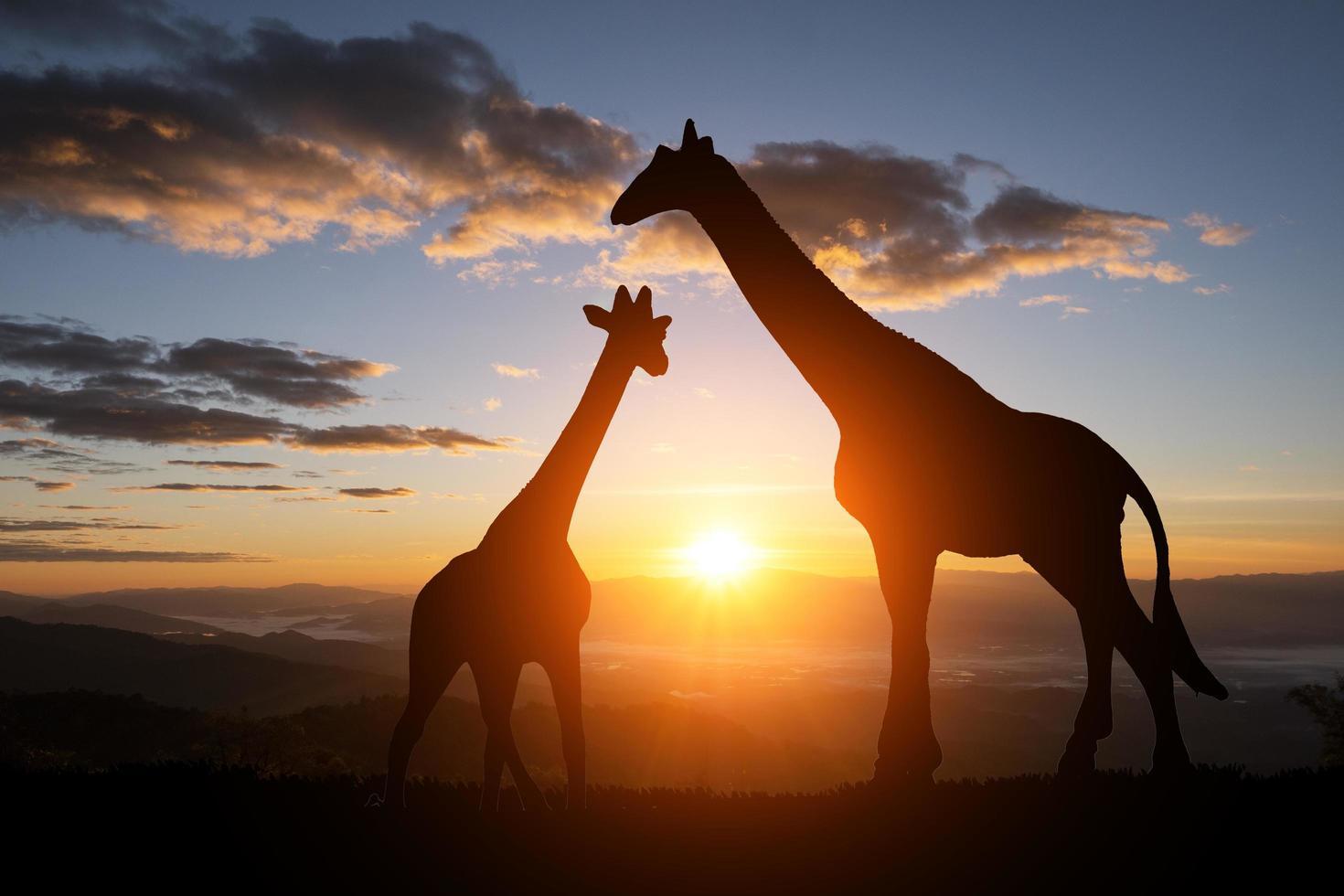 a silhueta de uma girafa com o pôr do sol foto
