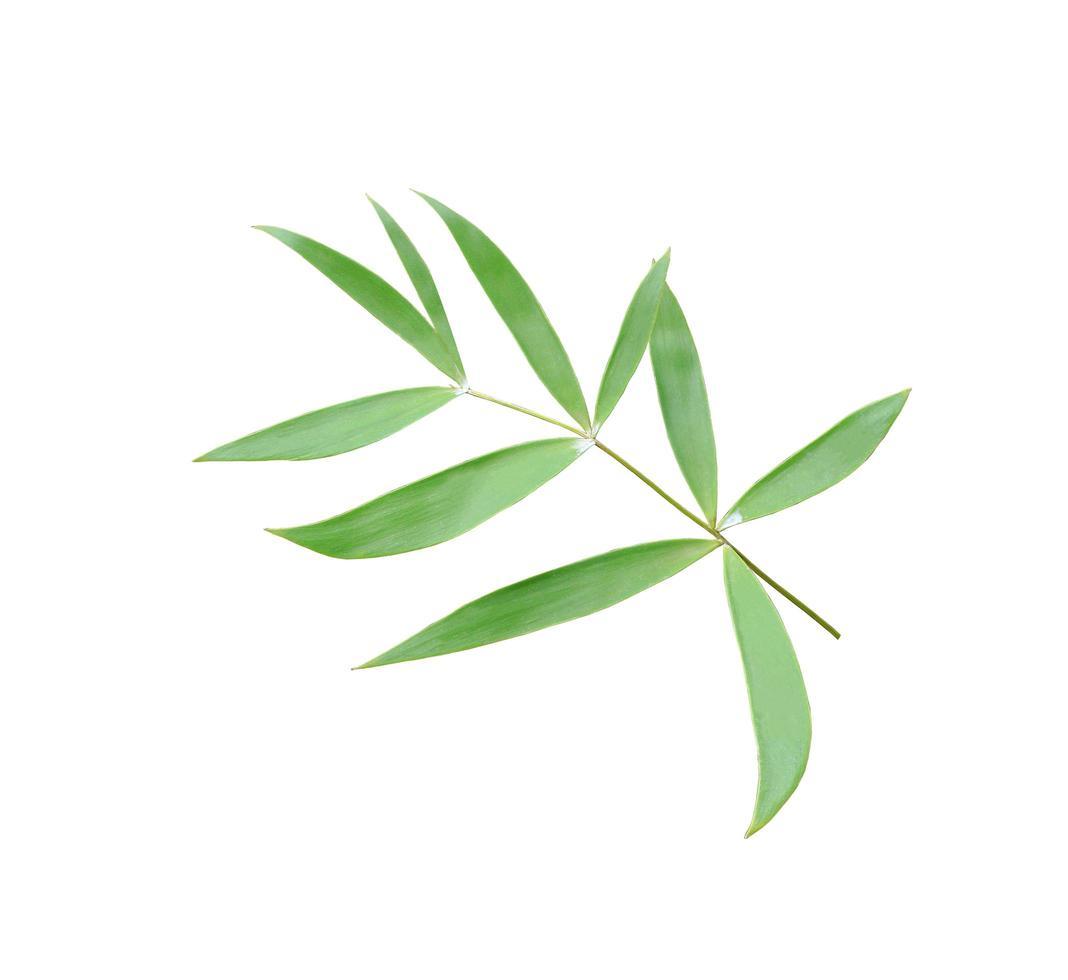 folhas verdes exuberantes tropicais foto