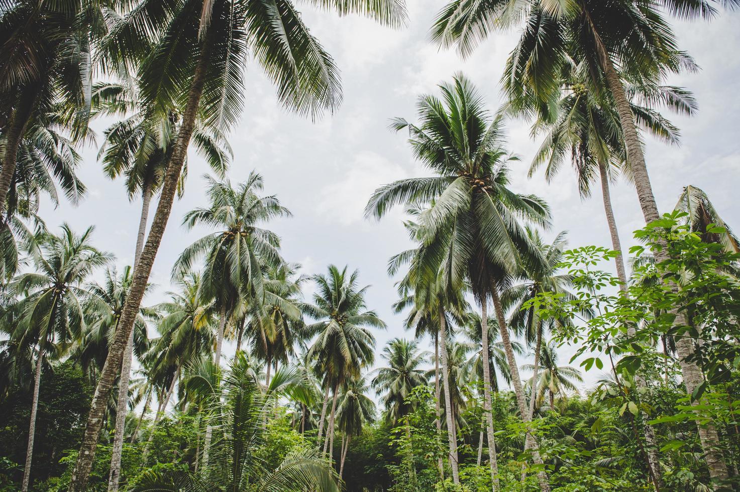 jardins de coqueiros na tailândia foto