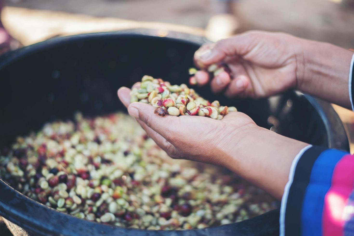 close-up de grãos de café de frutas vermelhas crus na mão do agricultor foto