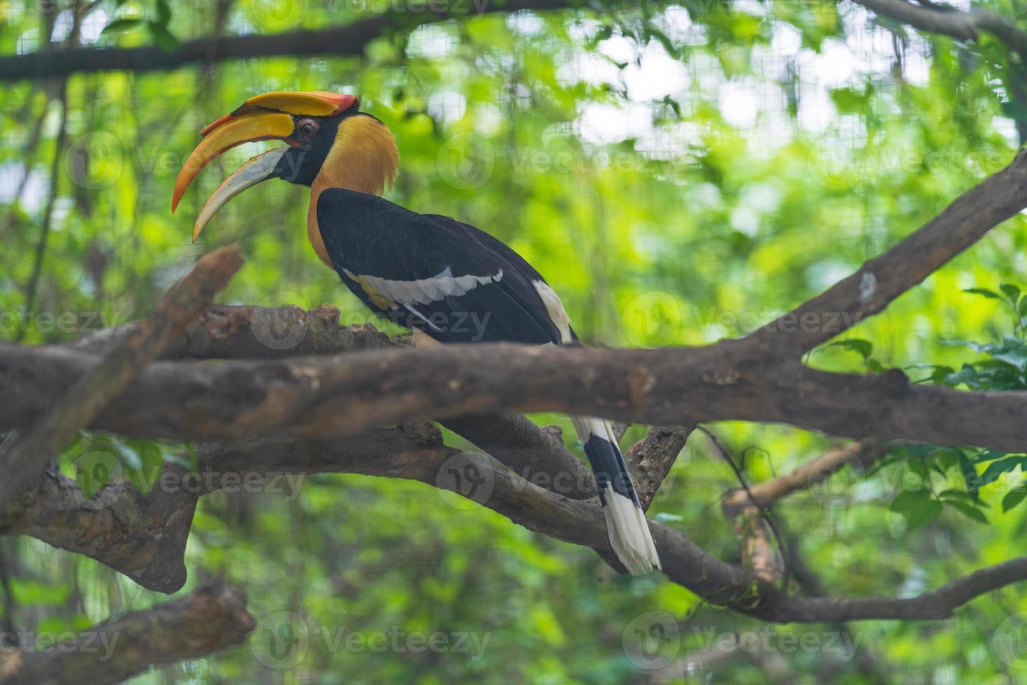 pássaro calaus em uma árvore à noite foto