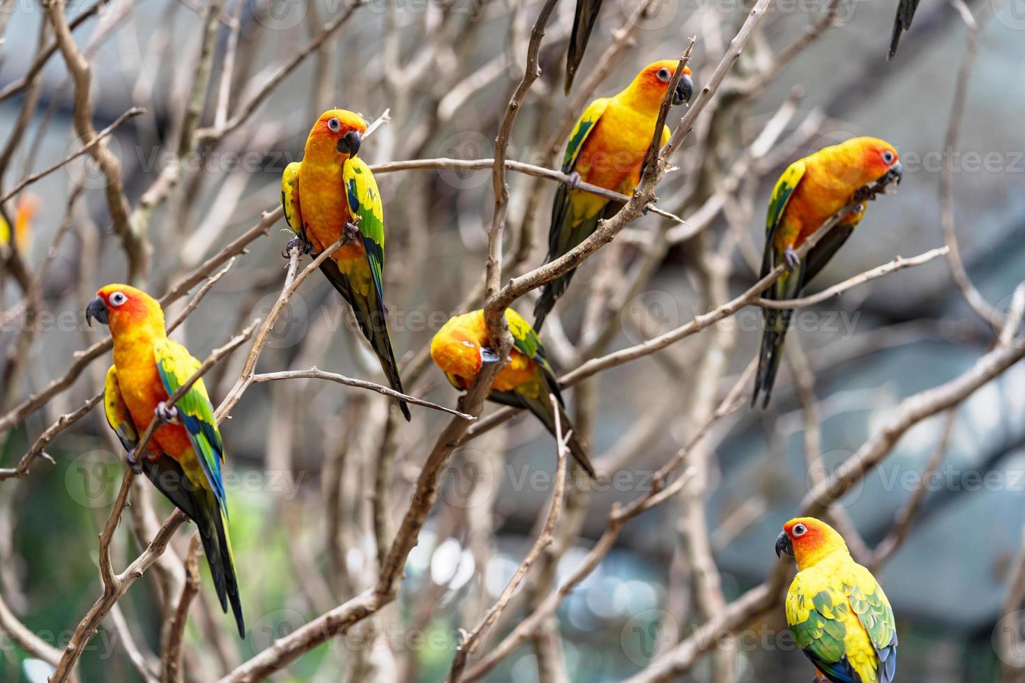 papagaios-do-sol coloridos em galhos de árvores foto