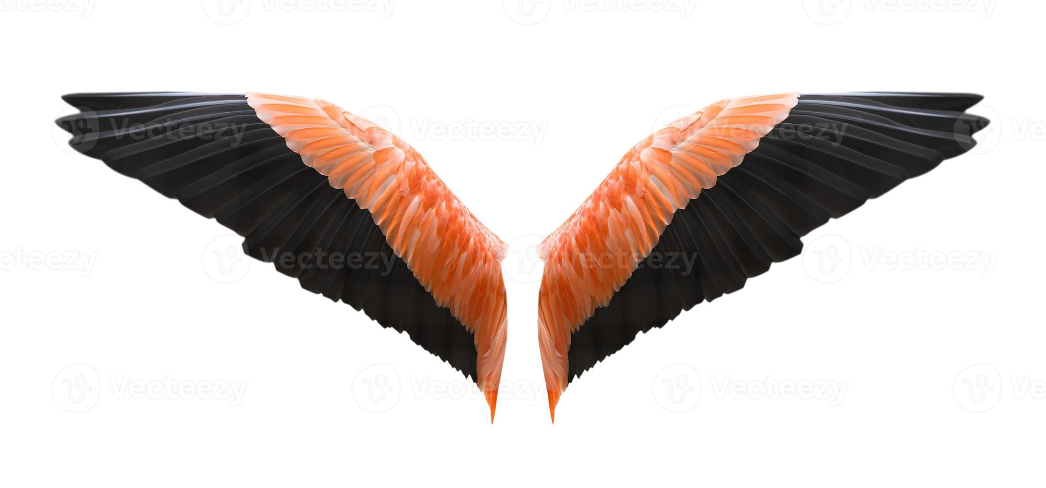 asas de anjo isoladas em fundo branco foto
